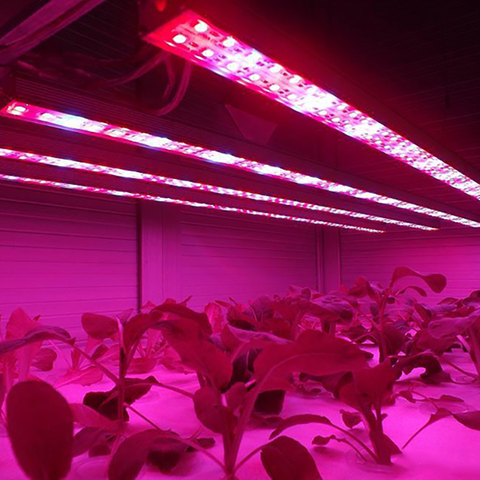 Hydroponic LED Grow Light  Strip