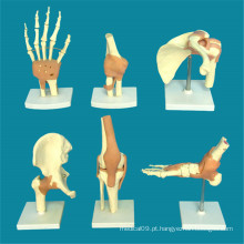 Modelo de Ensino Médico de Esqueleto de Anatomia das articulações humanas (R020903)