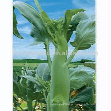 KL03 Chenghai flor branca grande tamanho chinês sementes de brócolis sementes kailan