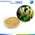 GMP завод питания высокое качество чистой природы жимолость цветок экстракт