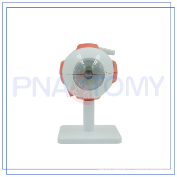 PNT-0661 Enlarged hot sale Human Eye model