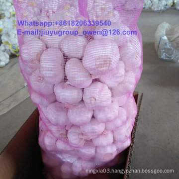 New Crop Raw Normal/Pure White Garlic Top Quality