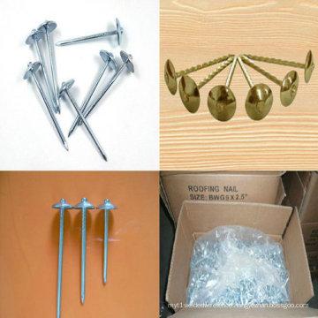 Hardware Nails Hot Galvanized Wire