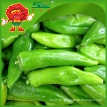 Wholesale big green chilli with high quality low price