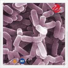 Lactobacillus Casei Freeze Dried Powder