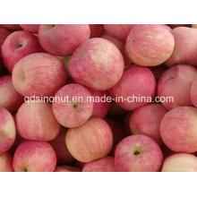 Свежее яблоко FUJI