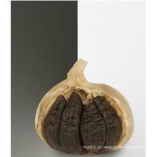 Черный Чеснок 5,0 см для экспорта