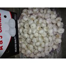 Alho branco puro da colheita nova fresca