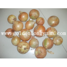 Fresh Vegetable Yellow Onion