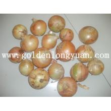 Cebola amarela de vegetais frescos
