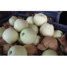 Fresh Jinshuai Apple / Frutas Chinas de Alta Calidad