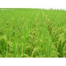 Аминокислотный хелат бора для органического сельского хозяйства
