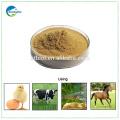 Polvo de levadura de cerveza de alta calidad para todos los alimentos de origen animal