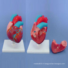 Modèle médical de démonstration du coeur humain anatomique (R120103)