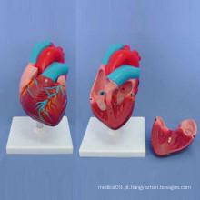 Modelo de demonstração do coração humano anatômico do ensino médico (R120103)