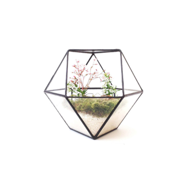 Round Clear Geometric Square Glass Hanging Terrarium