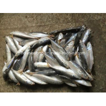 (14-18PCS/kg) New Fish Frozen Round Scad