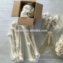 Esqueleto desassemblado artificial humano