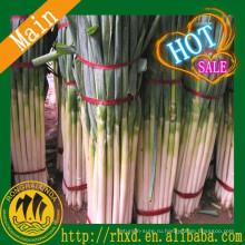 К 2015 году Новый листинг свежим зеленым луком и свежим зеленым луком цене