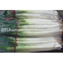 Свежий китайский лук, зеленый лук,