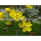95% Rutin ( Sophora japonica extract)