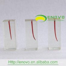 EN-N8 Differing grau de curvatura dentro Root Canals Transparente bloco S4