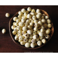 Semente de lótus orgânico, semente chinesa de lótus
