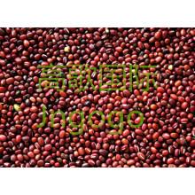Exportation de nouveaux aliments de culture Haute bonne qualité Qianity Red Bean