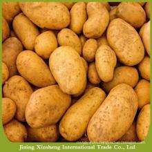 Wholesale bulk sweet potato