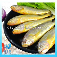 FROZEN LITTLE YELLOW CROAKER FISH(SEAFOOD)