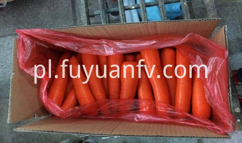 size M fresh carrot