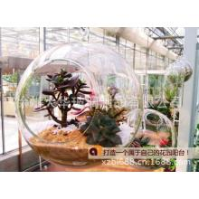 Hanging Glass Ball for Tissue Culture/Wedding