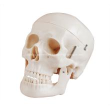 Estilo de cráneo de lujo de tamaño natural D