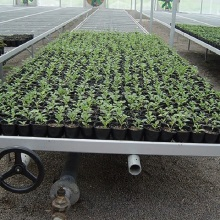 factory low price Used for Greenhouse Seedling Nursery Bed Rolling Benches with Ebb and Flow System supply to Antigua and Barbuda Exporter