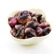 Grandes haricots mouchetés noirs (LBSKB) Origine du Yunnan