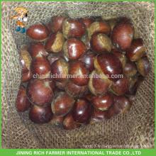 Haute qualité Chine Rich Farmer Fresh Chestnut Packed in Jute Bag