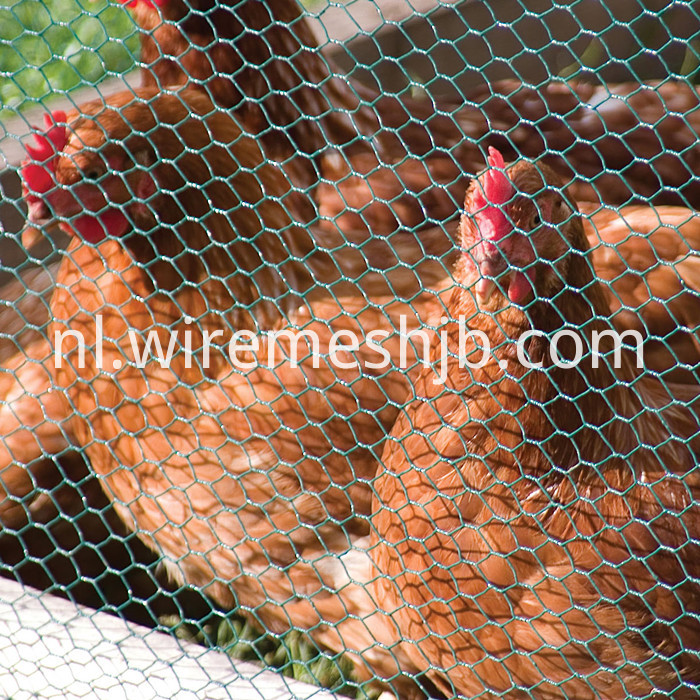 Hexagonal poultry wire fence