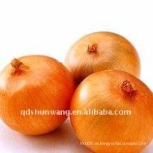 Cebolla de alta calidad