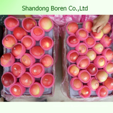 Shandong Delicious Juicy Crisp Sweet Gala Apple