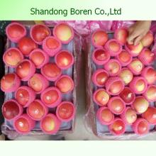 Шаньдун вкусный сочный хрустящий сладкий гала-яблоко
