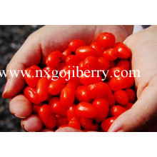 Berry Goji seco / Wolfberry / Medlar / Lycium Barbarum