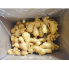 Ginger/Fresh Ginger/Air Dry Ginger for Exporting