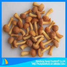 we specialize in supplying frozen mushroom frozen nameko mushroom