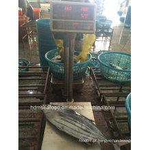 Abastecimento de produtos aquáticos Skipjack Atum