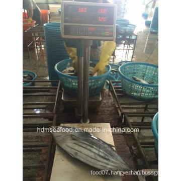 Supply Aquatic Product Skipjack Tuna