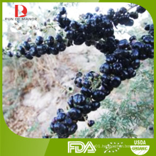 2015 new harvest high quality organic black goji berries/Chinese wolfberries from Ningxia
