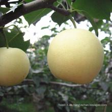 Eporting Qualität frische goldene Birne / Krone Birne