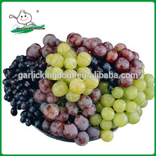 Grapes China/red grapes/Best fresh red grapes