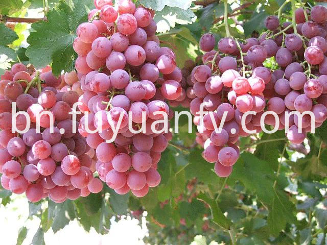 Red Grape Hotsale