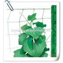 fabricante neto de soporte de planta verde para frijol, pepino, tomate
